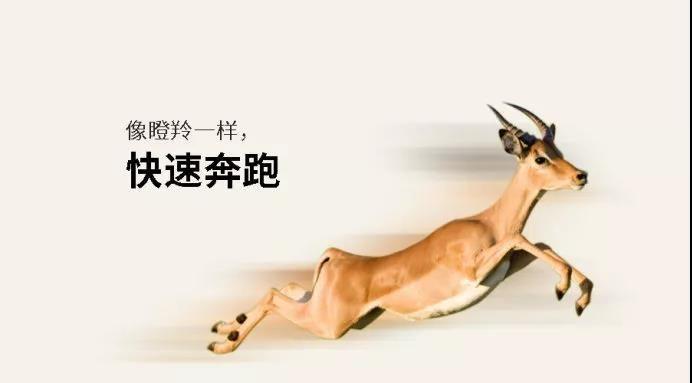 """武汉和信益公司及下属全资子公司双获2018年""""瞪羚企业"""""""
